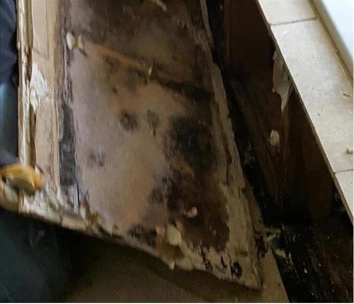 Mold Remediation Maui Residents: Follow These Mold Safety Tips If You Suspect Mold