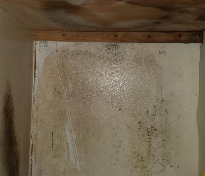 Mold Remediation Steps To Eradicate and Prevent Bathroom Mold