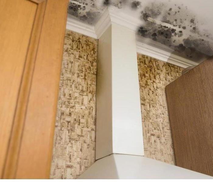 Break the mold how to deal with mold in ductwork - How to deal with mold ...